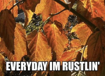 herfst meme - elke dag ben ik rustlin