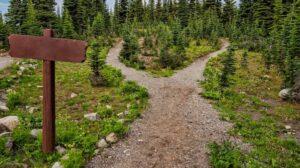 Pad divergerend in een bos